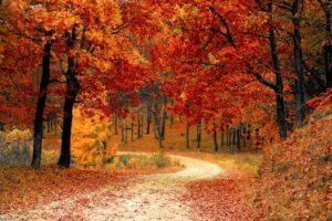 "Alt=""menù autunno"""